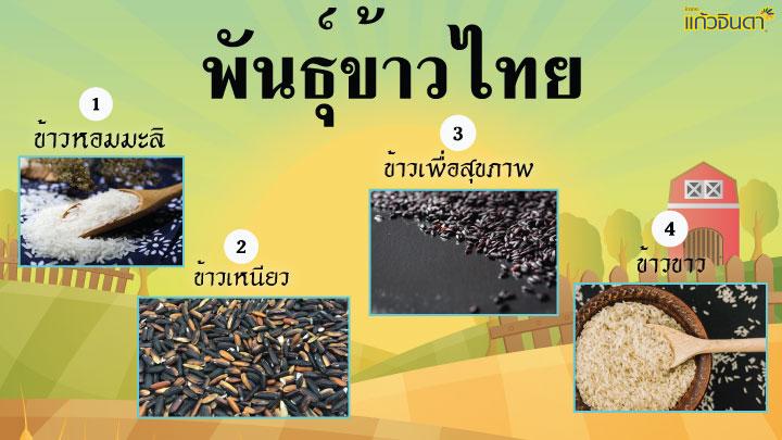พันธุ์ข้าวไทย